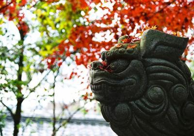 「ひとり紅葉狩り部 2008 西山東山洛北など 京都ぐるり三日間」 の追加写真