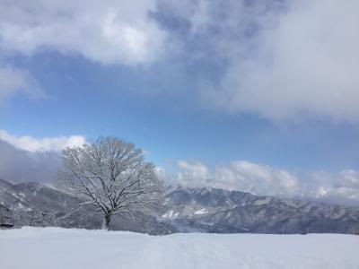 海外旅行だけでなく国内スキーも行くよ♪ 2019年1月・2回目の八方尾根の巻
