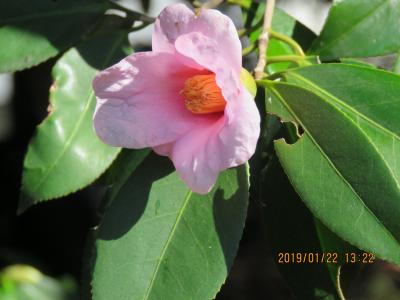 久しぶりに皇居・東御苑を訪問しました②二の丸休憩所~二の丸庭園~諏訪の茶屋~都道府県の木