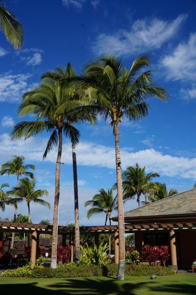 2019ハワイアン航空でハワイ島と思い出のオアフ島へ♪①キングスランドに到着