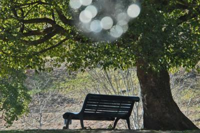 一年を通じて季節の花が楽しめる花フェスタ記念公園へ
