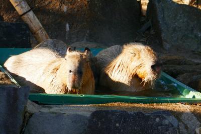金沢動物園で癒されました