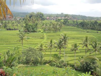 インドネシア バリ島2018・・・(8)ジャティルウィの棚田、田んぼの中の露天風呂、聖なる寺院など、この日も盛りだくさん