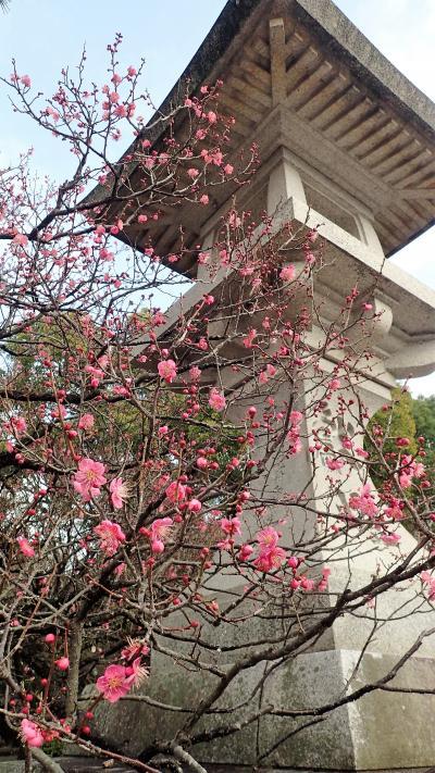 1月の3連休は、四半世紀ぶりの博多へ、昔訪ねた場所思い出せるかな?