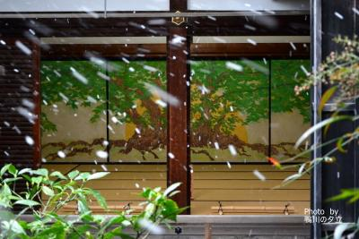 光明院のお墓掃除と京の冬の旅妙心寺編!2019年