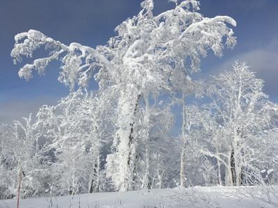 2019年初滑り、富良野&新雪ばっちりカムイスキーリンクス