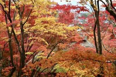 京都 嵯峨野の紅葉を満喫