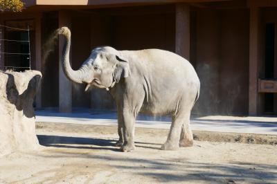 東山動物園は広いです!