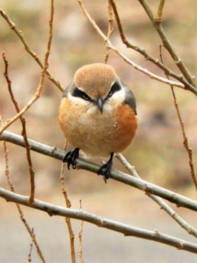 野鳥飛び交う三木山森林公園