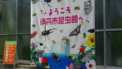 昆陽池公園の昆虫館の蝶の見学 上巻。