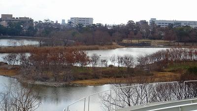 昆陽池公園の昆虫館の2階の展示品と屋上からの眺め。