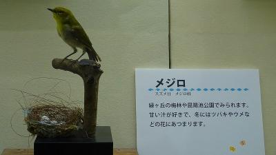 昆陽池公園の昆虫館の1階の企画展の見学。