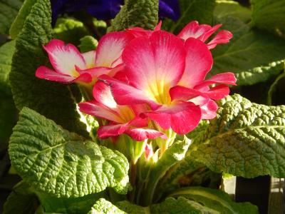 ガーデンセンターで見られた春の花⑤