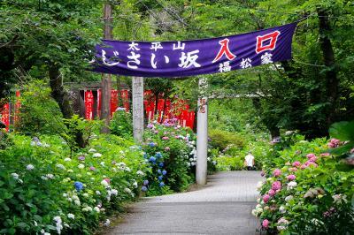 栃木市・太平山・あじさいハイキング