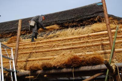 茅葺き屋根の葺き替え工事を見学しました。