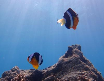 沖縄・久米島2019冬(20)恩納村ダイビング。青い海と太陽の光に浮かぶクマノミ