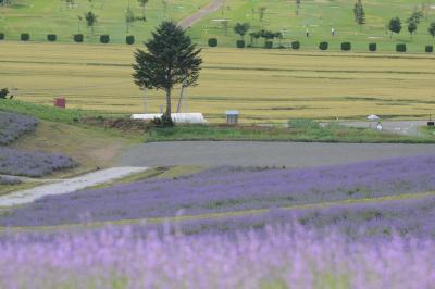 七月連休に行くラベンダー満開の北海道 後編、花畑めぐり