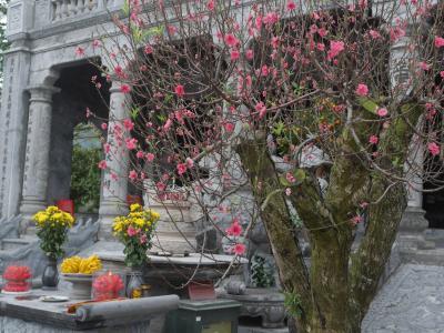 ニンビンの世界遺産地区をプチ散歩1 タイヴィー 謎の文字のお寺。リンコック 鍾乳洞を見学できるお寺。