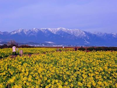 雪をかぶった比良の山並みと菜の花のコントラストが美しい♪琵琶湖マリオットホテルに泊まってきました!