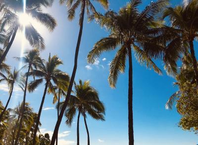 ハワイで家族旅行 後半 (ご飯)
