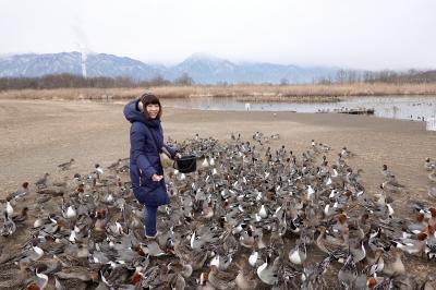 安曇野でスゴい数のカモに囲まれてしまった件について(^_^)