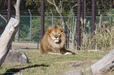 千葉市動物公園はほのぼのしています