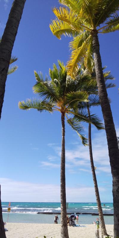 再びハワイへ!子連れ海外第4弾 vol.1 寒さからの逃避行