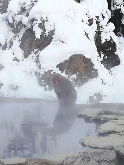猿と温泉と