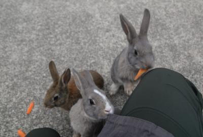 瀬戸内島巡り紀行 ウサギと毒ガスの島 大久野島を訪ねて