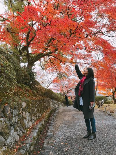暖かい日が続いたお陰で12月なのに紅葉バッチリの旅