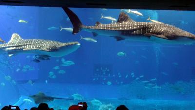 避寒の目的で、沖縄滞在 (4) 美ら海水族館
