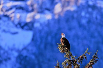 雪に覆われたカナディアンロッキーと野鳥の宝庫ブリティッシュコロンビア州