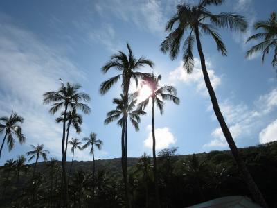 特典航空券&ヒルトン無料宿泊3泊分でハワイへ~2日目
