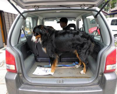 大型犬との旅の仕方 その1