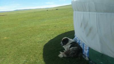 夏休みモンゴル旅行(一人旅)ーテレルジ1泊2日ツアー