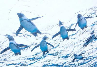 空飛ぶペンギンと~っても可愛い~♪