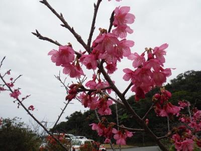 今年も日本一早い花見 1