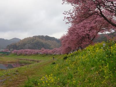 春のぐるっと伊豆周遊旅1泊2日①★ニ日目は南伊豆→西伊豆→伊豆長岡でお花と海と世界遺産