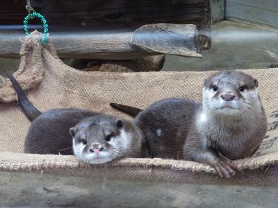 2017冬の18切符で動物園遠征4-周南市徳山動物園