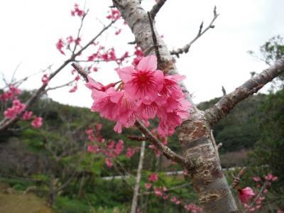 今年も日本一早い花見 2