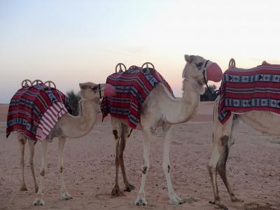 砂漠のリゾート、最高!