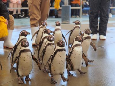 かわいいペンギンのお散歩を見に「鳥羽水族館」へ 魚々味で伊勢海老2匹半を使った豪華な「伊勢海老御膳」を食べよう