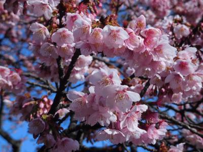小石川植物園2019立春