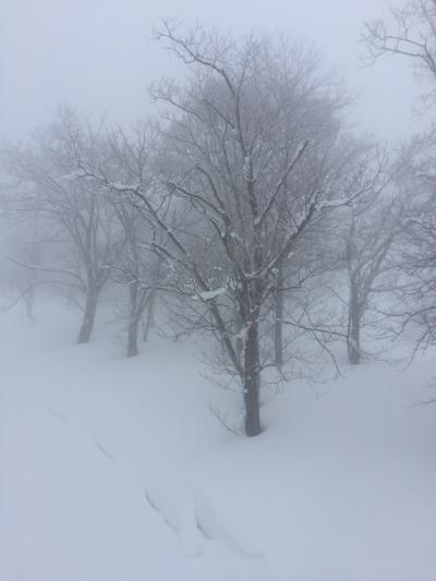 雪質最高の雪山でした。野沢温泉~赤倉