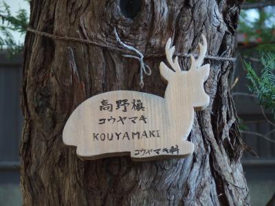いきものだらけ・ちび子と札幌1泊2日のたび 帰る日