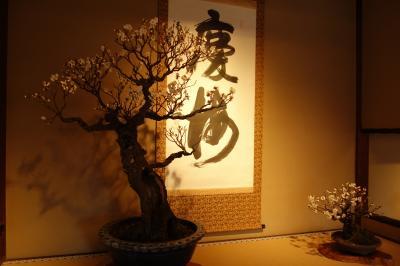 冬の長浜 ~長浜盆梅展・長浜城・今重屋敷・海洋堂ミュージアム~