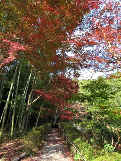 2018年11月 紅葉の山口 常栄寺 雪舟庭の紅葉を楽しみました。