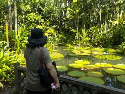 今年もシンガポールへ! その2 シンガポール植物園へ。