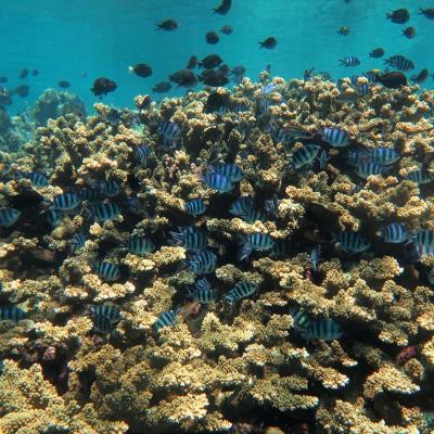 ノンダイバーだって珊瑚礁の海で遊びたいんだってば!シラデン島への旅①
