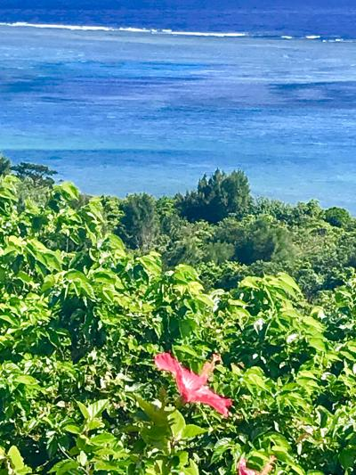 沖縄/毎日寒いから石垣へ逃げるさぁ~@ホテルククル(2019年2月)